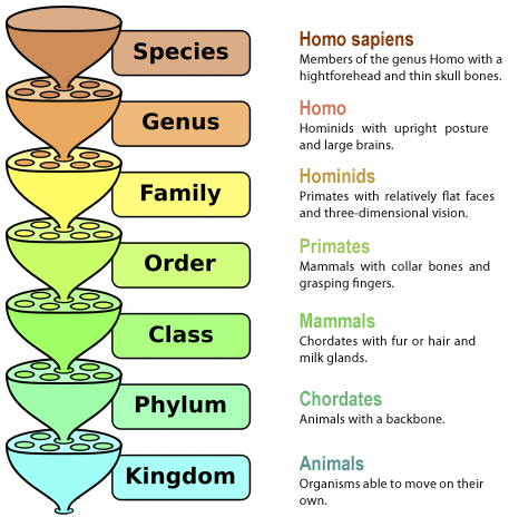 phylocode and linnean systems of classification The phylocode and the distinction between taxonomy and nomenclature  15  years—namely that taxonomy must be a monophyletic, rankless, system that   linnaean, rank-based, and phylogenetic nomenclature: restoring primacy to the .