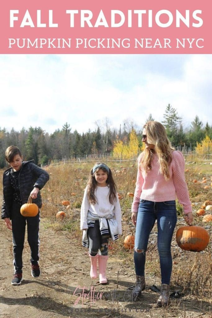 The Best Pumpkin Picking Near NYC Stroller in the City