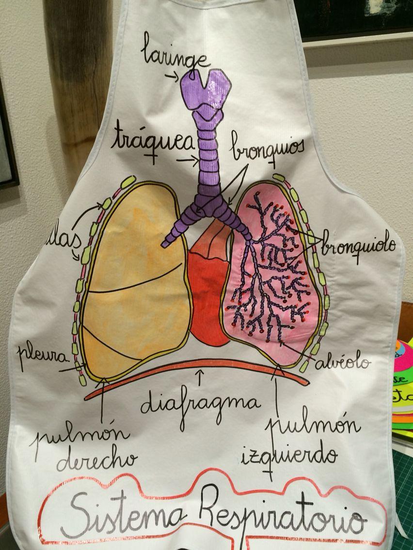 Sistema respiratorio. Delantal para aprender de forma divertida ...