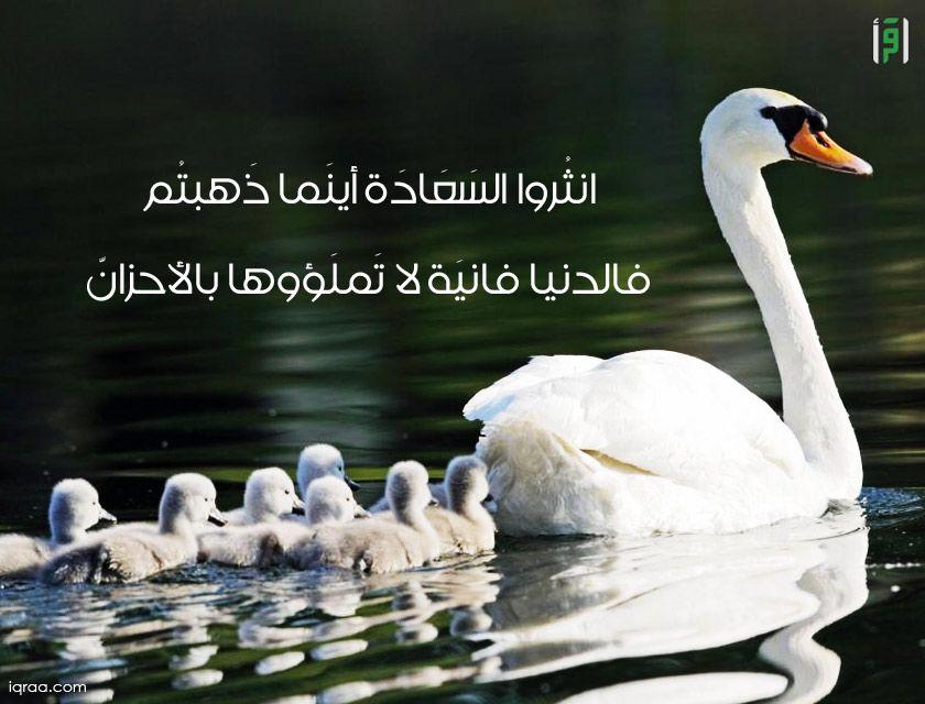 انثروا السعادة اينما ذهبتم قالدنيا فانية لا تملؤوها بالاحزان اقرأ للناس كافة حكمة Animals Swan