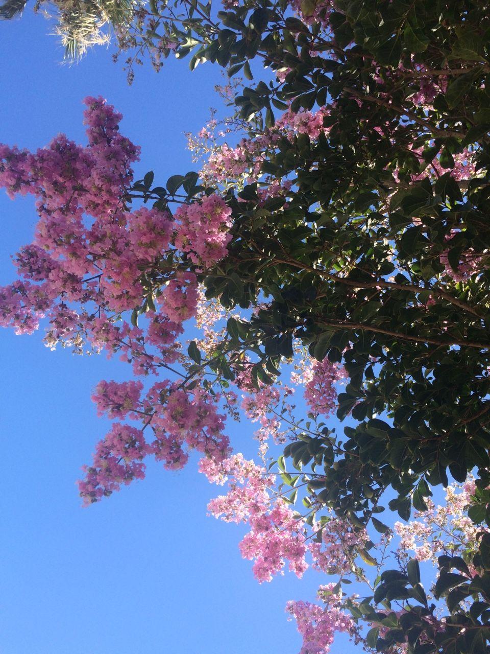 Pin by Sydney Nadal on botanical Flower aesthetic