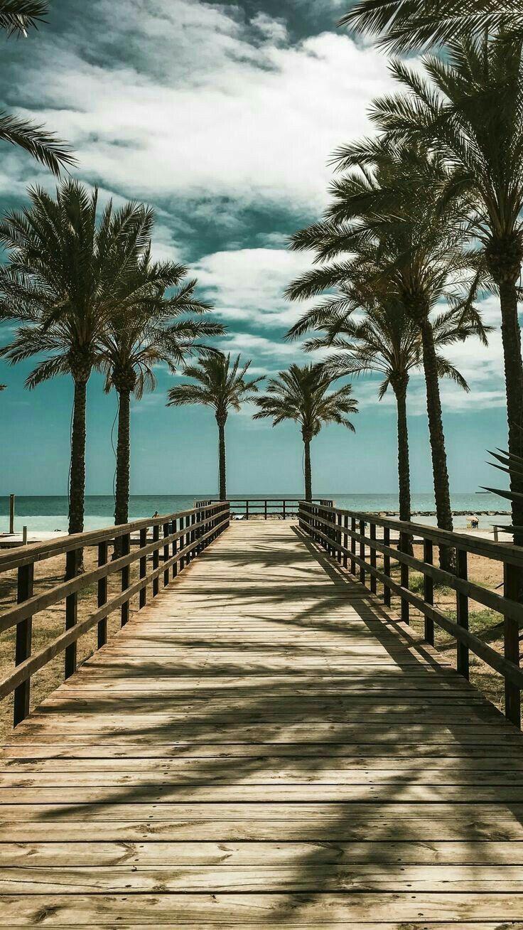 Palmen | Sommer Hintergrundbilder | Mädchen Hintergrundbilder | iPhone Hintergrundbild für Sperrbildschirm #hintergrundbild #hintergrundbilder #ipho…