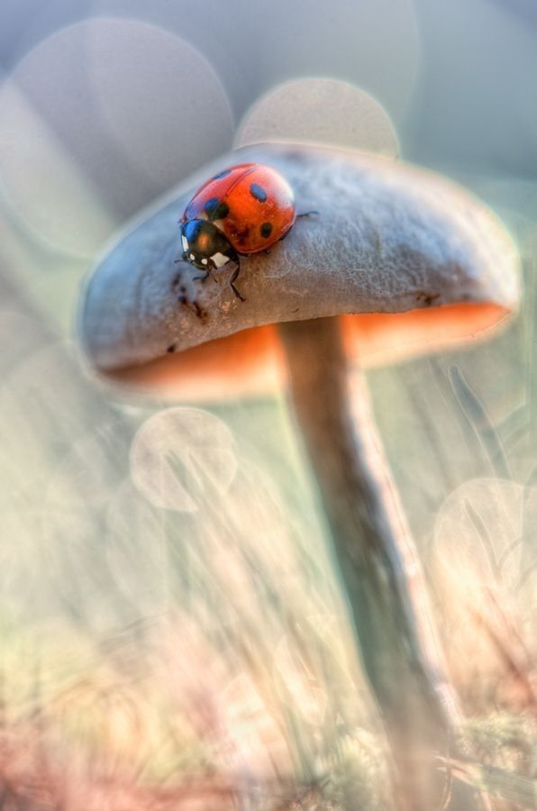 God loves all creatures GREAT and SMALL :) | Love | Ladybug, Insect