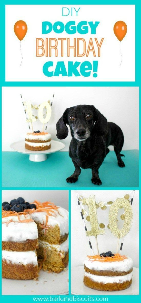 Dog Birthday Cake Recipe Delicious Dog Treat Recipes By