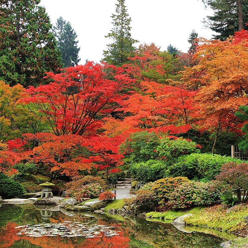 The SeattleJapaneseGarden is in full fall foliage mode