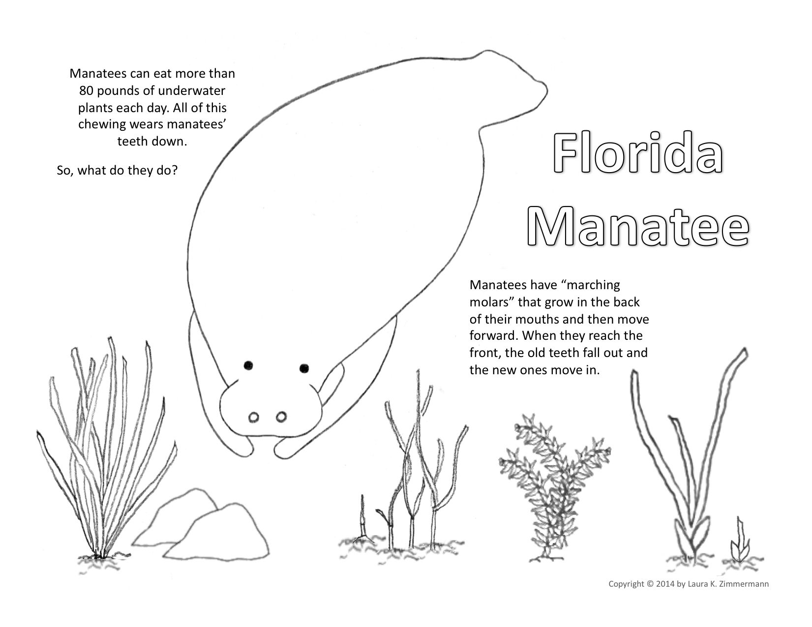 Manatee Coloring Page   Coloring and Activity Pages   Pinterest ...