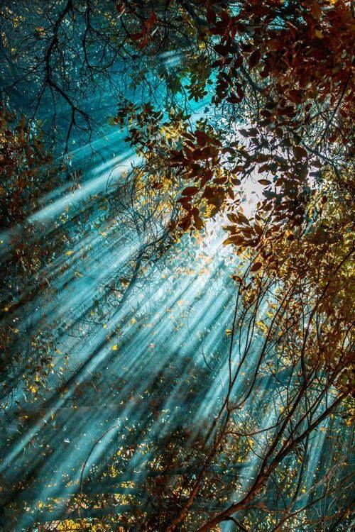 Fotos Da Mae Natureza Fotografia Da Natureza Ideias
