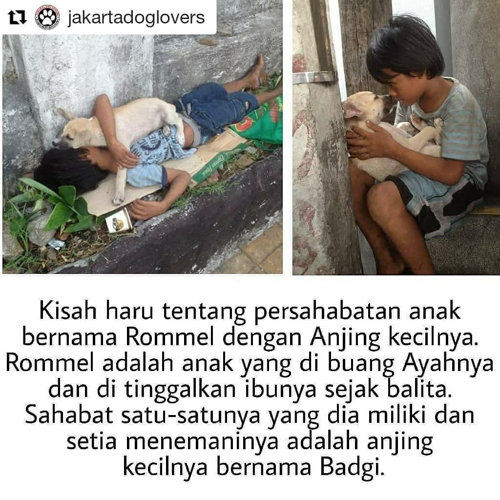 Repost Jakartadoglovers Repost KESETIAAN Kisah Haru