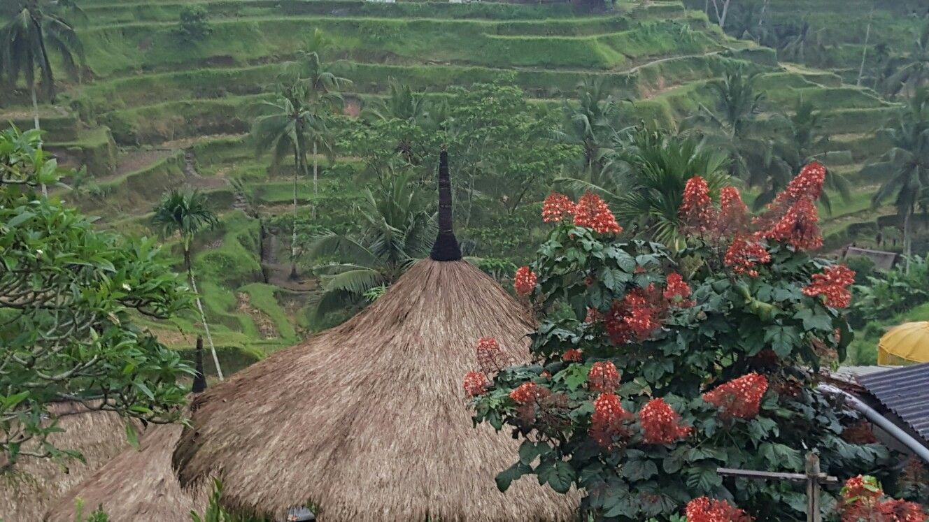 Tegalalang Rice Terrace, Ubud