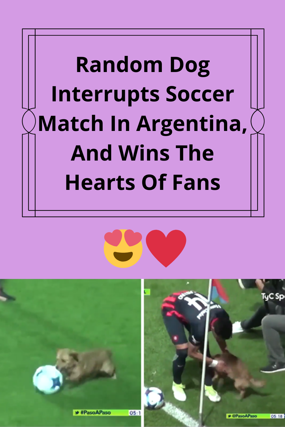 Random Dog Interrupts Soccer Match In Argentina, And Wins
