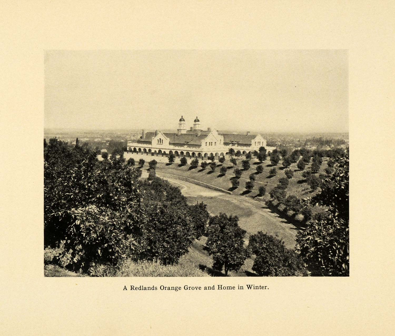 1906 Print Redlands California Orange Grove Burrage Mansion