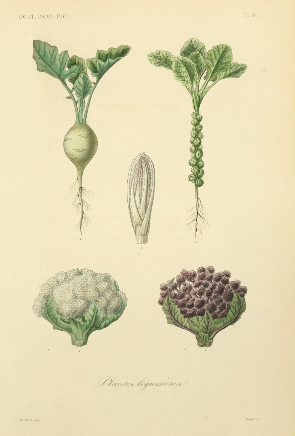 Horticulture: Jardin potager et jardin fruitier by Hérincq, F. (François), 1820-1891 and Gérard, Frédéric. / Not In Copyright (aka public domain) - http://www.biodiversitylibrary.org/item/43933#page/55/mode/1up