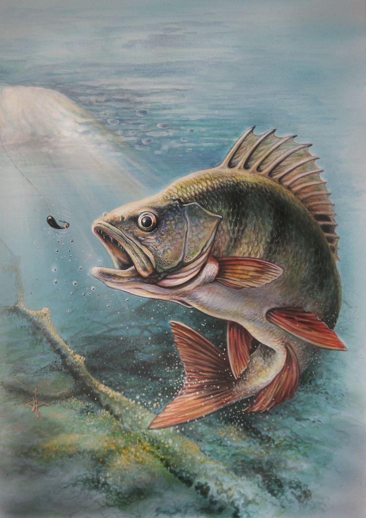 картинки рыб окуня щуки интерьер все картинах