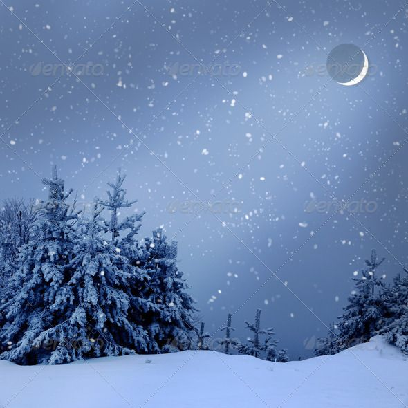 Beautiful Winter Landscape With Snow Covered Trees At Night Background Beautiful Beauty Blue Branch Winter Landscape Snow Covered Trees Winter Scenes