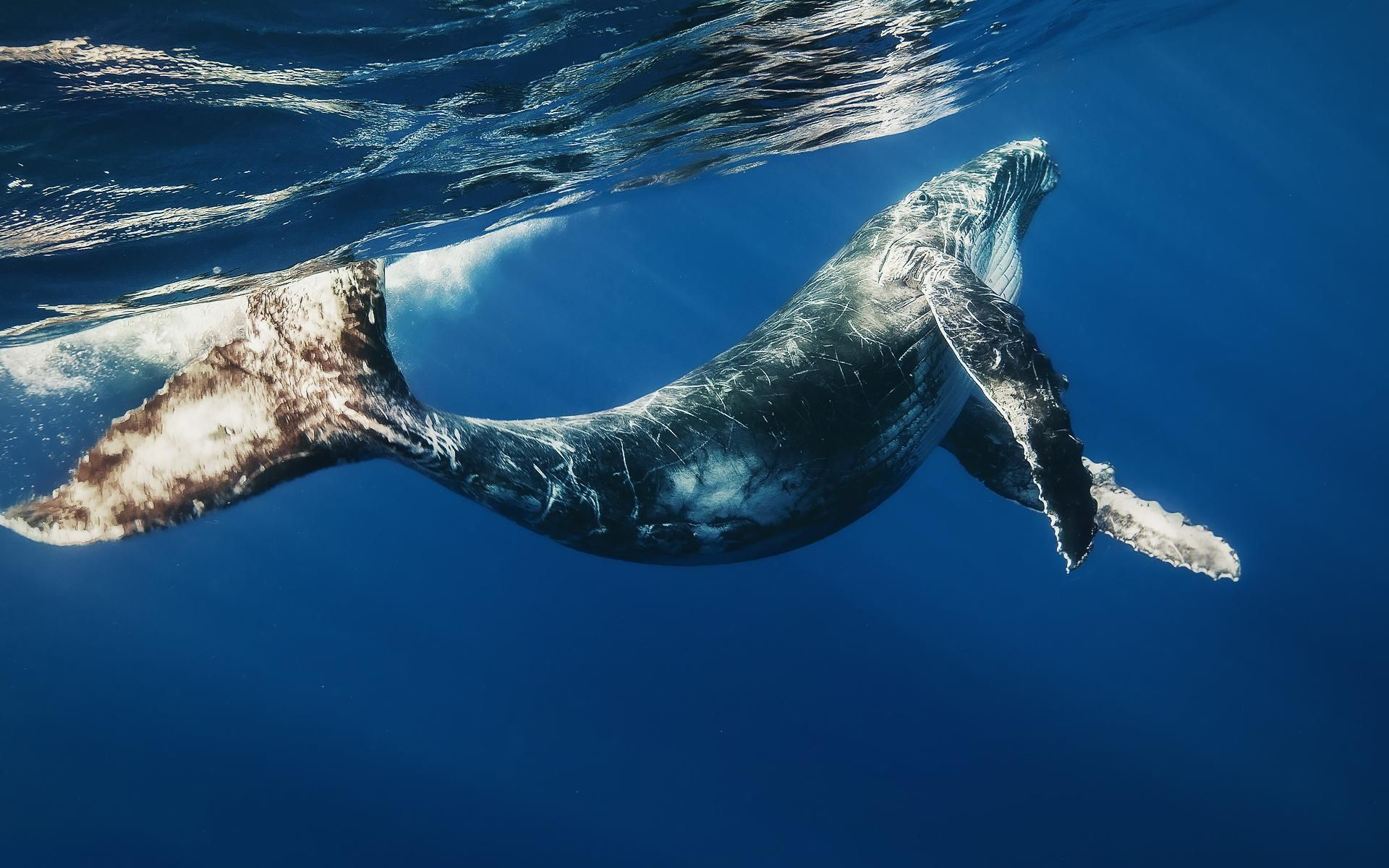 Undefined Whale Wallpapers 48 Wallpapers Adorable Wallpapers Whale Pictures Whale Blue Whale