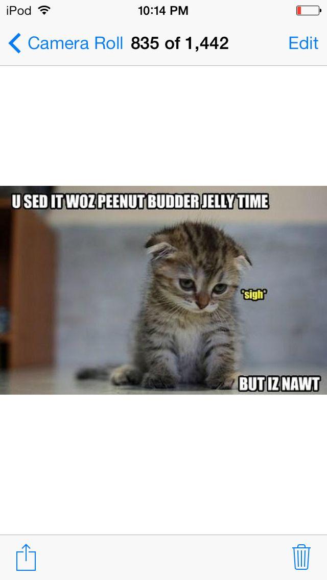 Funny cat meme cats memes