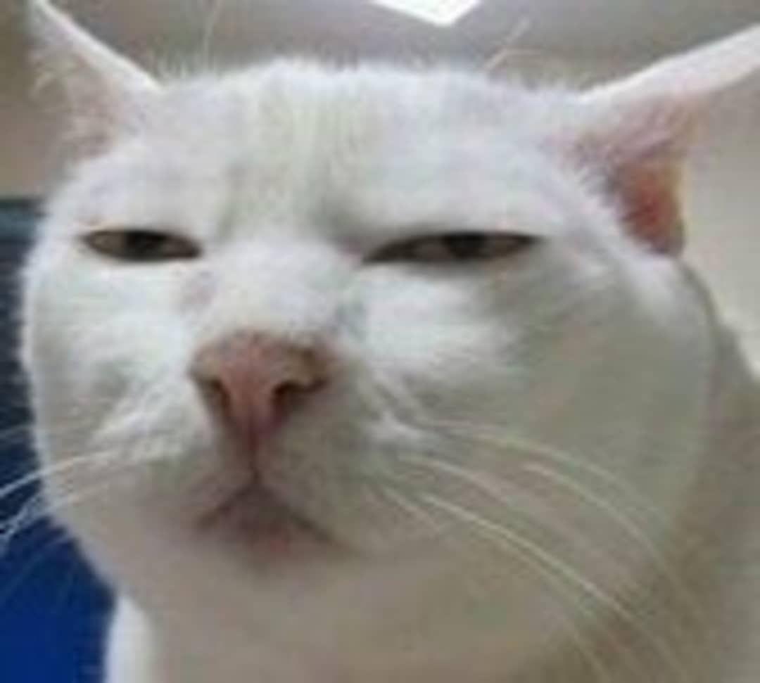 Wtf You Lookin At Cats Cat Catmemes Memes Memesdaily Catsofinstagram Funny Laugh Comedy Cute Adorable Fluffy Meme Binatang Meme Kucing Humor Hewan