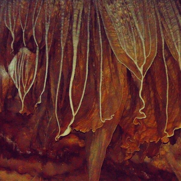 How beautiful,, save them #Stalactite @luweng suling , pacitan, east java, indonesia