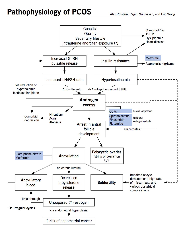 Pathophysiology Of Pcos