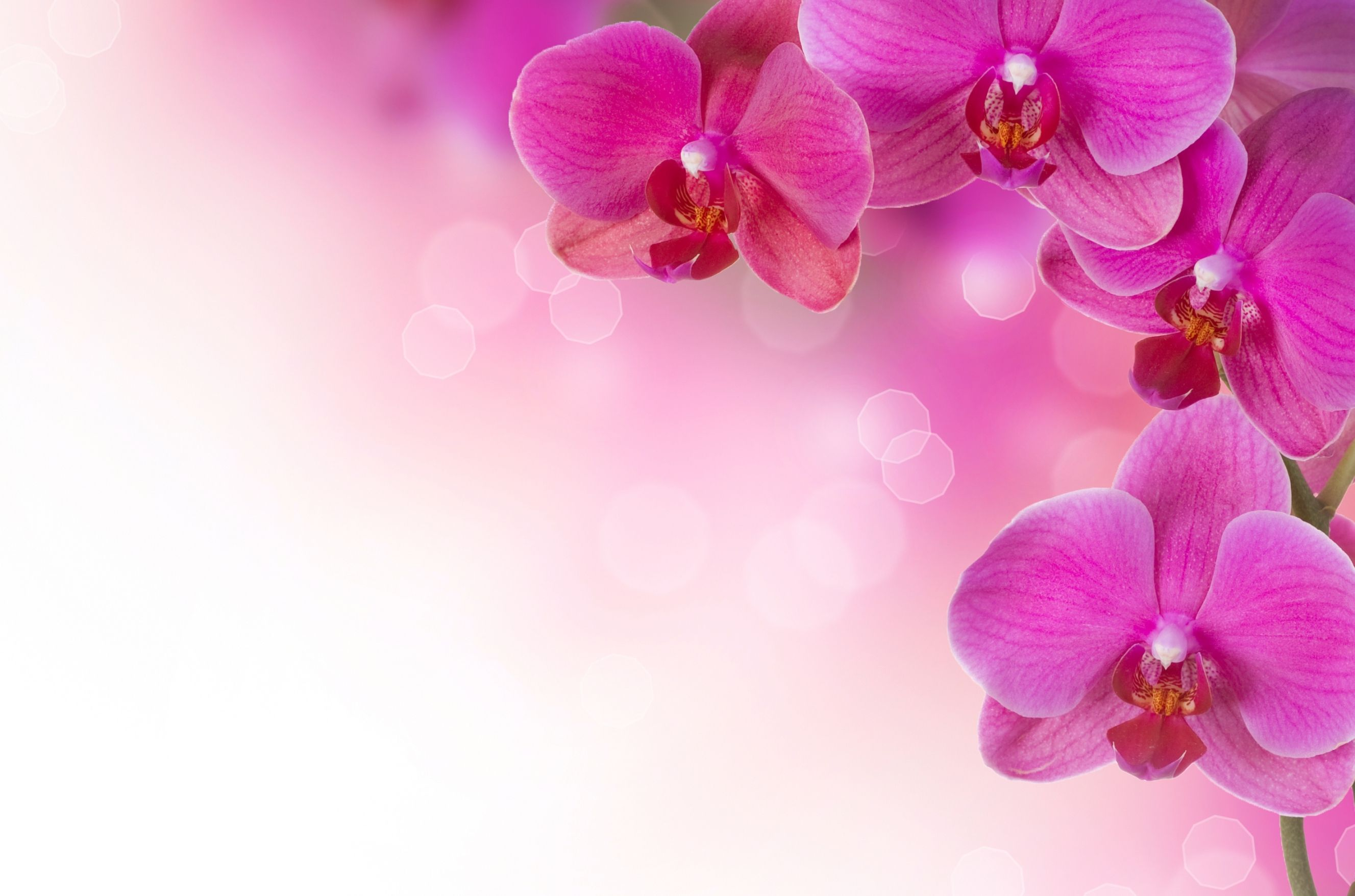 Pink Orchid Wallpaper 1080p Desktop Wallpaper Box In 2019
