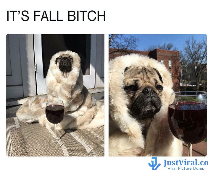 Funny Memes For A Bad Day : Funny dog memes that will cure your bad day funny dogs