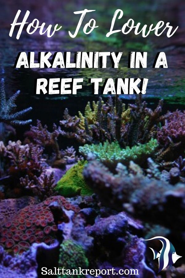 Alkalinity is one of the most important water parameters to check in a reef tank. Here is how to lower alkalinity properly. #saltwatertanks #reeftanks #saltwateraquariums #marinelife