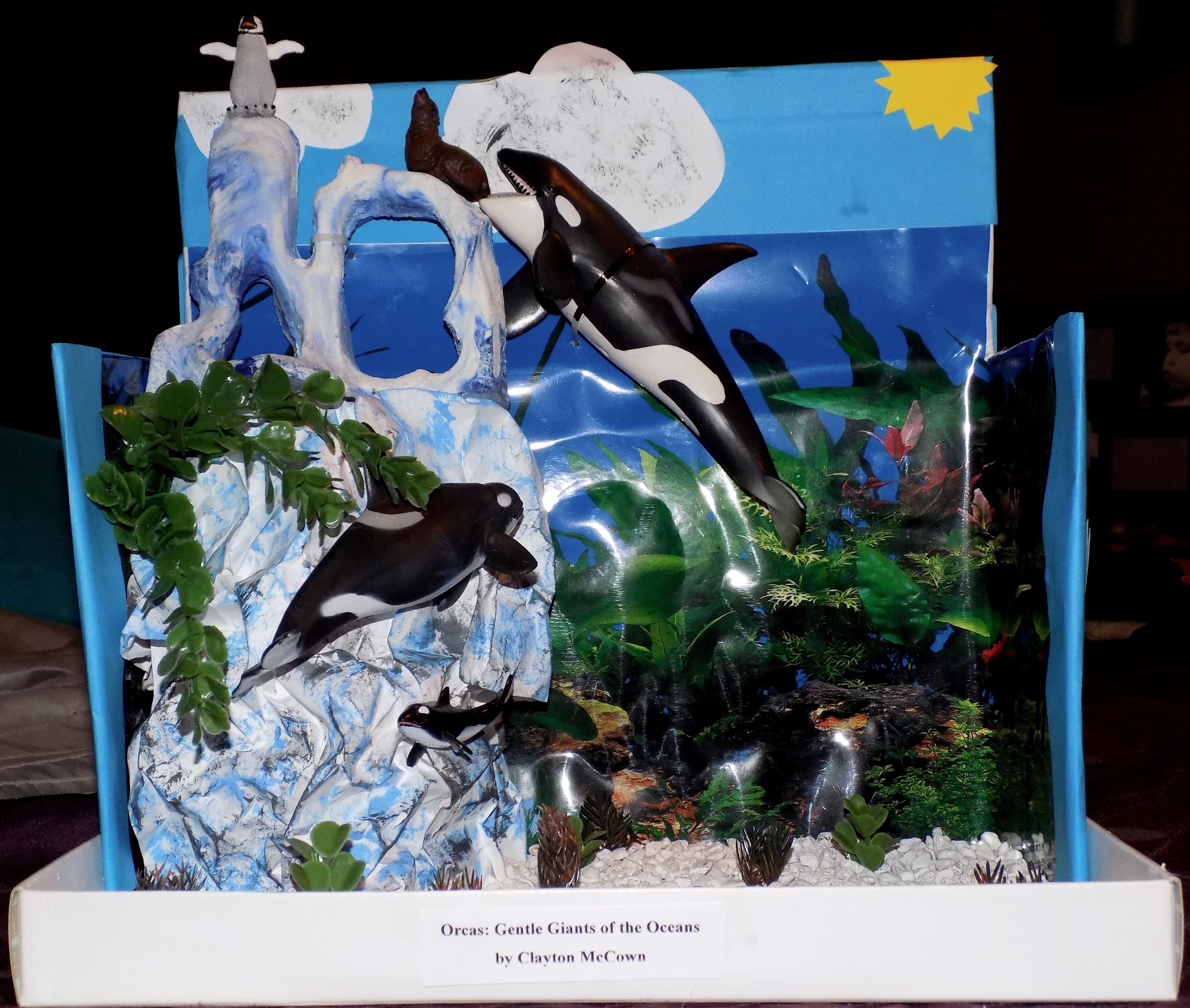 5th Grade Habitat Project Orcas Killer Whales