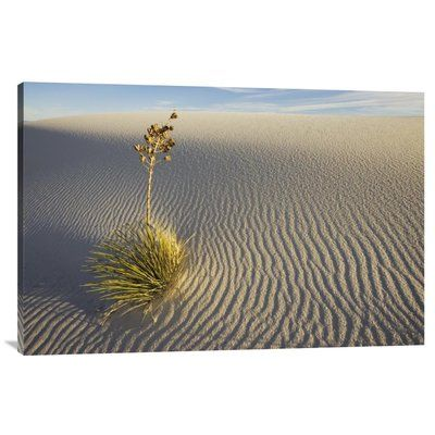 East Urban Home 'Soaptree Yucca Growing in Gypsum Sand, White Sands National Monument, New Mexico' Photographic Print Size: