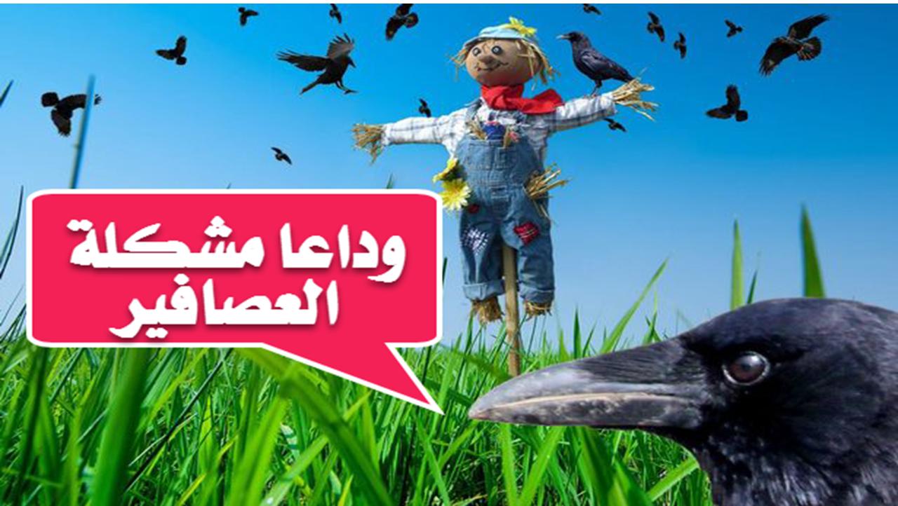 العصافير بتاكل نباتاتك الحل بسيط Movie Posters Poster Movies