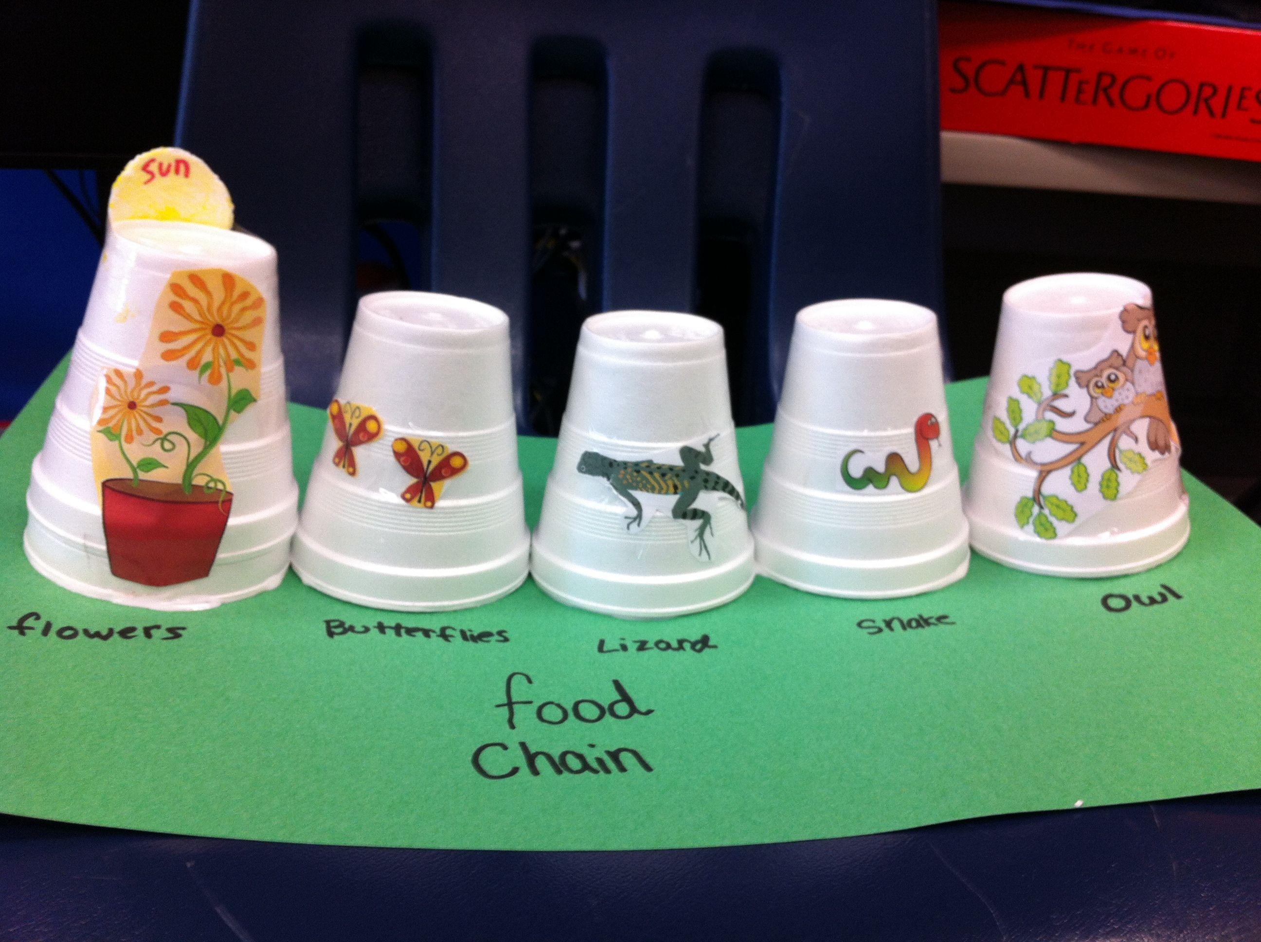 Pin By Vanessa D Silva On Food Chain Model Food Chain Activities Food Chain Homeschool Science [ 1936 x 2592 Pixel ]