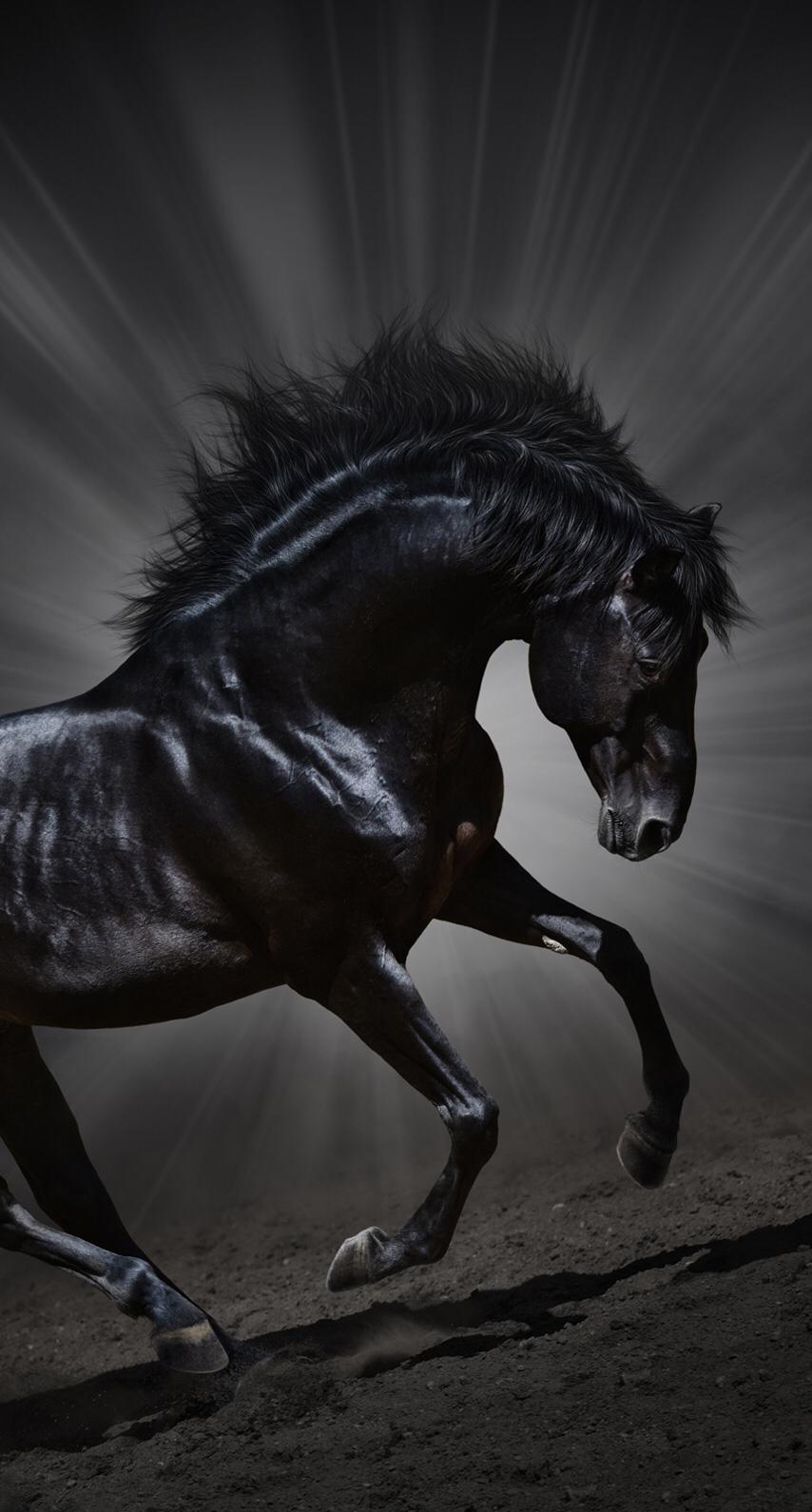 Black Phantom Wallpaper Luxurydotcom Horses Black Horses Pretty Horses