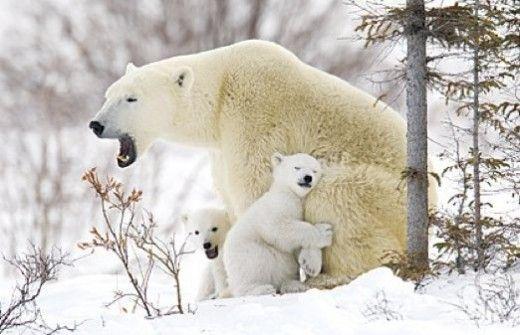 Stunning Nature Photography from Around the World