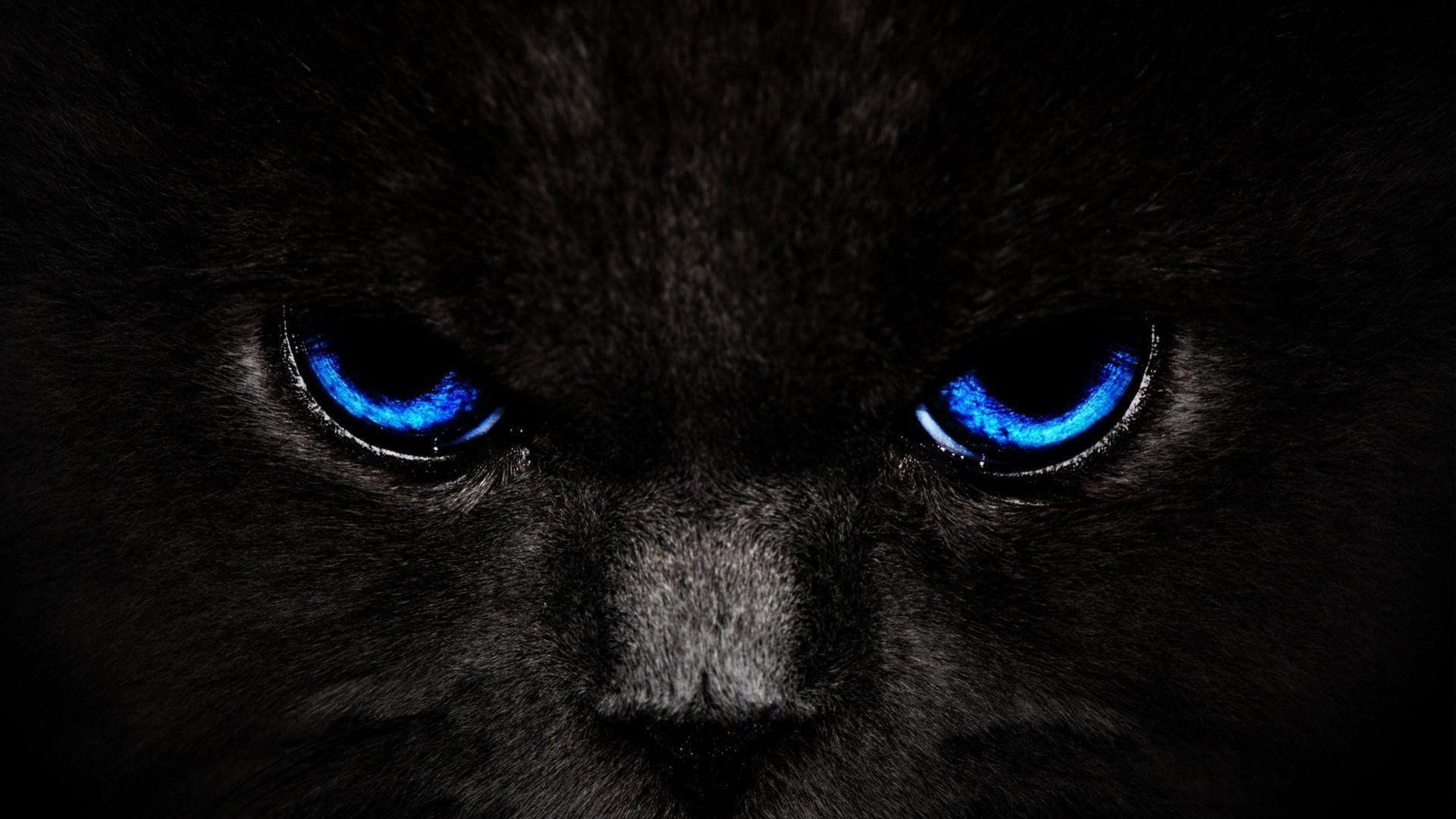 Beautiful Blue Eyes Cats Wallpapers HD For Desktop - HD Wallpapers ...