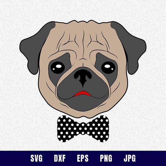 Pug face svg - Pug face vector - Print or more, Dog face ... (570 x 570 Pixel)