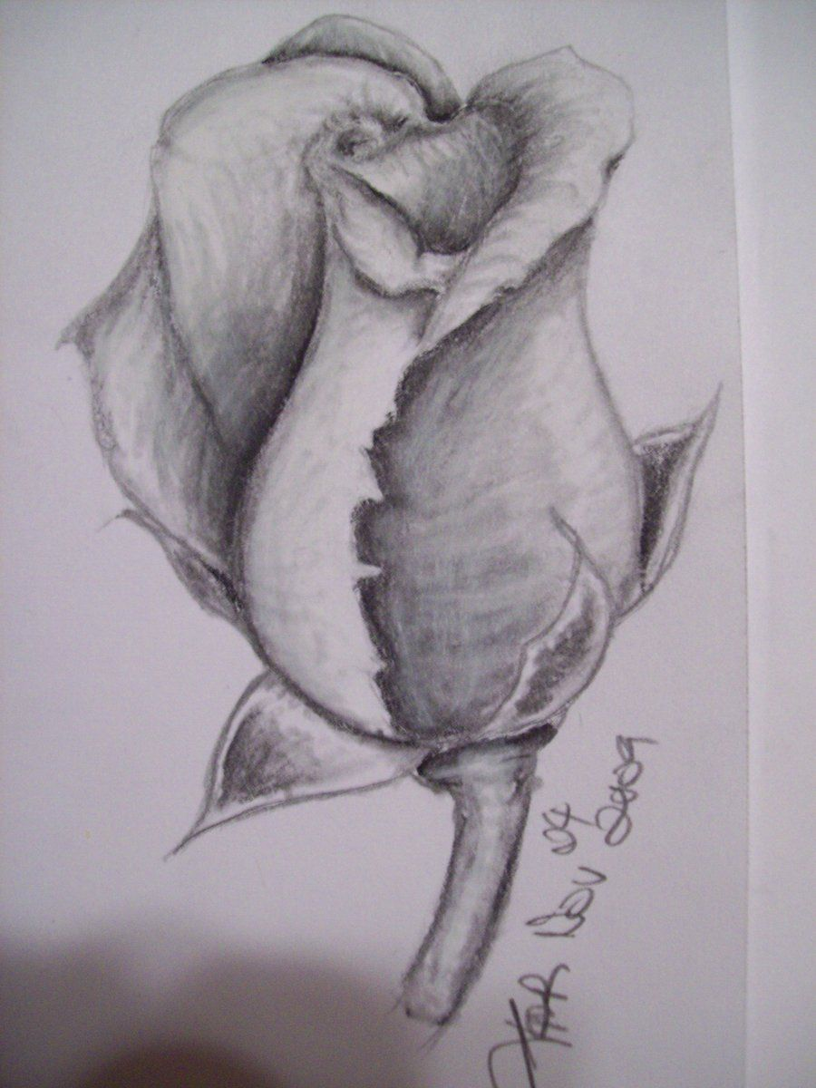Rose Sketch 2 By Little Miss Harajuku On Deviantart Rose Sketch Roses Drawing Flower Sketches
