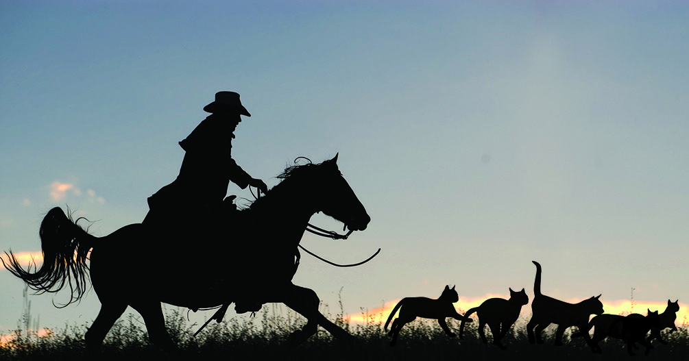 Cowboys Herding Cats Is This The Funniest Tv Ad Ever With