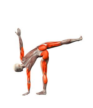 virabhadrasana rotated warrior pose on left foot  yoga
