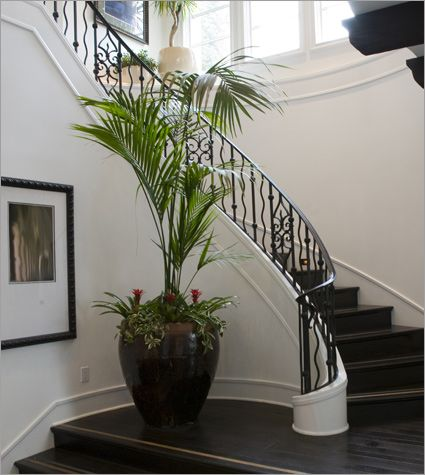 Make a statement with plant pots in unusually large dimensions ...