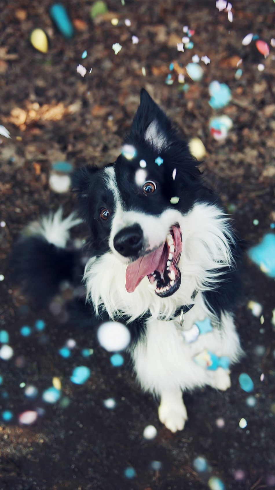 Happy Dog Playing Animales Perros Wallpaper 4k Ultra Hd