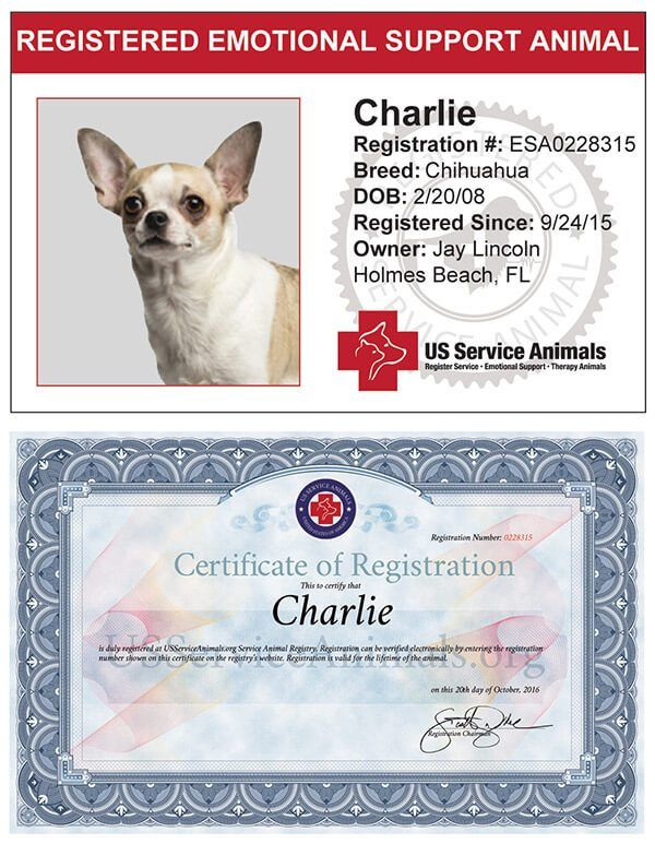service animal registry offering complete us service dog