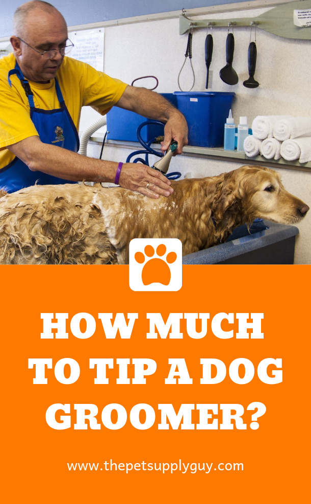 How Much Do You Tip a Dog Groomer? Dog Grooming Tips