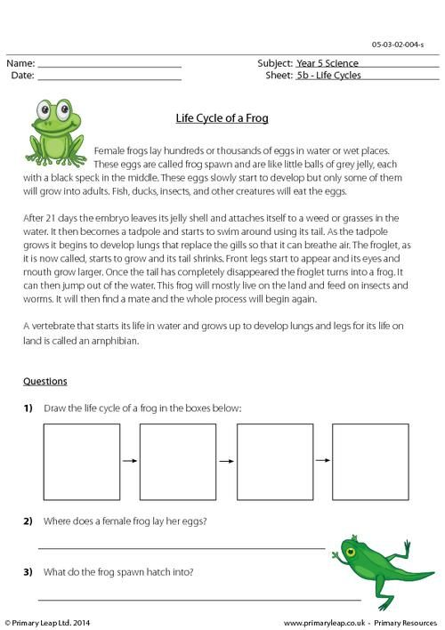 Primaryleap Co Uk Life Cycle Of A Frog Questions Worksheet Lifecycle Of A Frog Life Cycles Frog Life