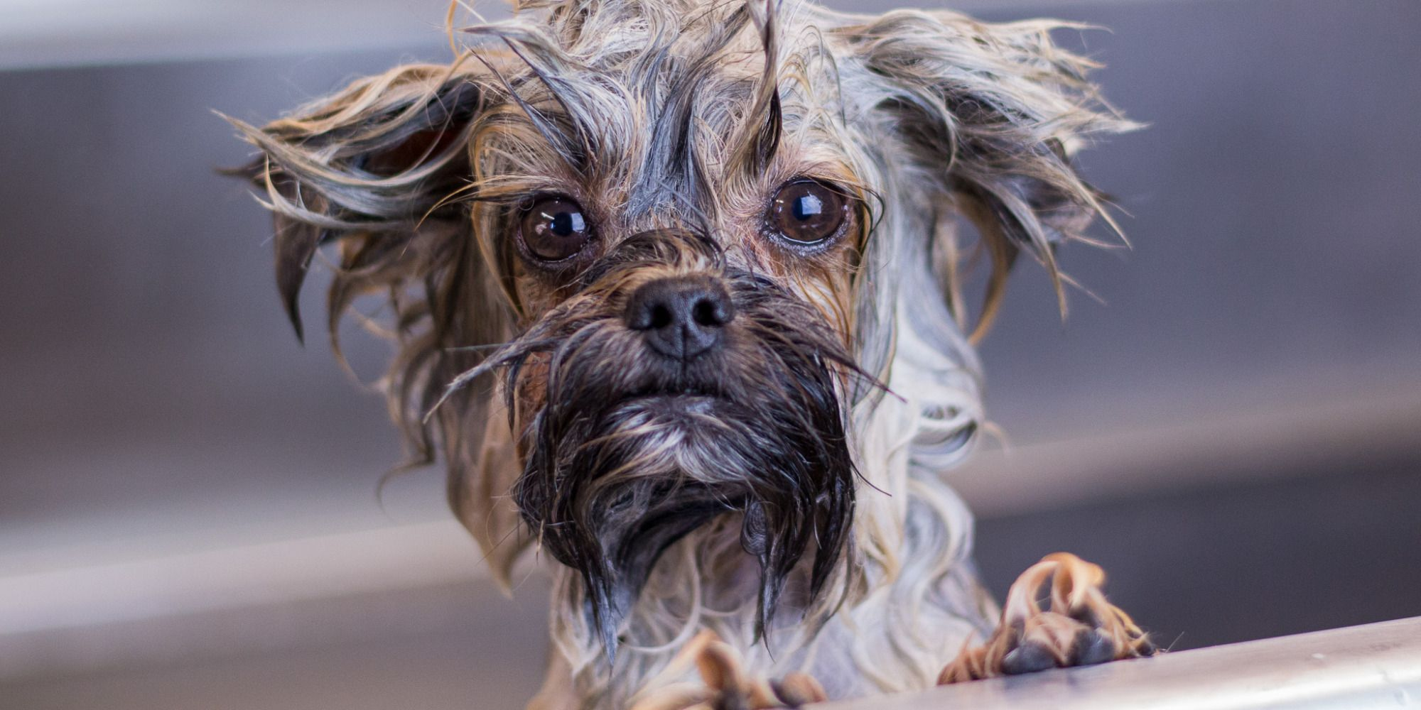 Before and After: One Groomer's Wet Dog Photography