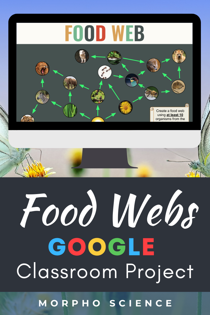 Food Web Project For Google Classroom Food Webs Projects Google Classroom Science Food Web [ 1102 x 735 Pixel ]