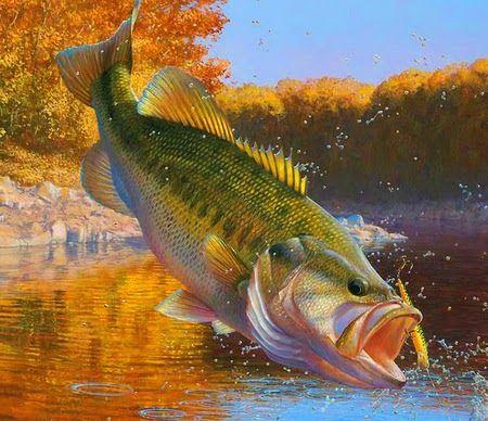Pin By Reid Carroll On Hunting Wallpaper Fish Artwork Fish Art Fish Wallpaper