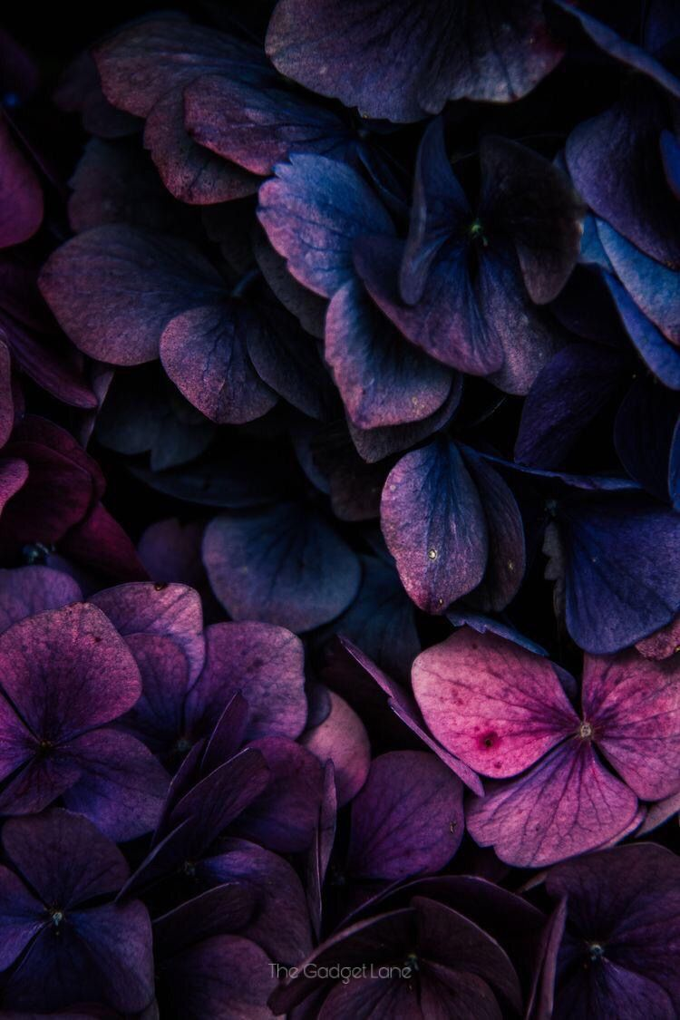 Floral flower wallpaper in 2020 flower phone