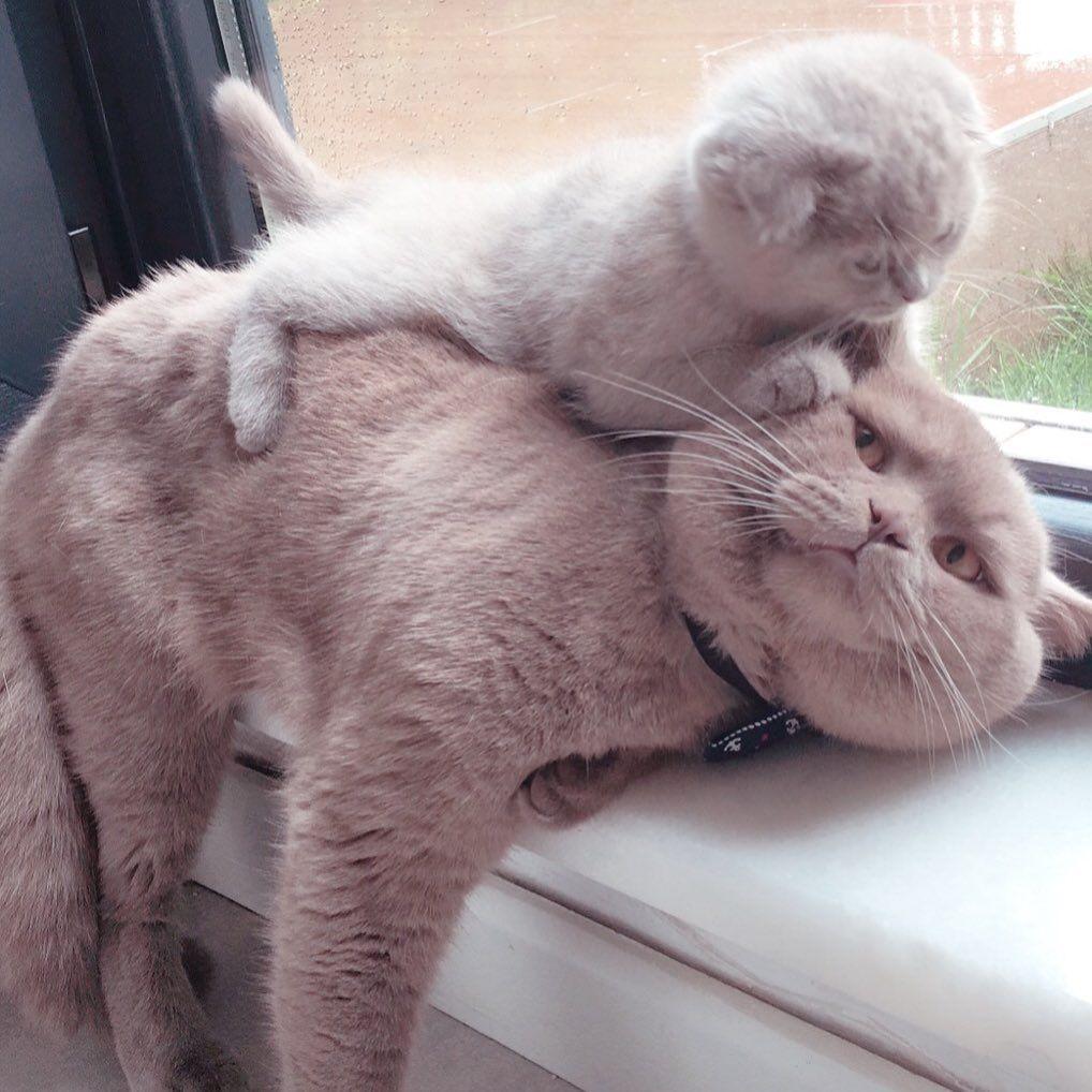 Pin By Yoli Adams On Kitties Cute Baby Animals Cute Cats Baby Cats