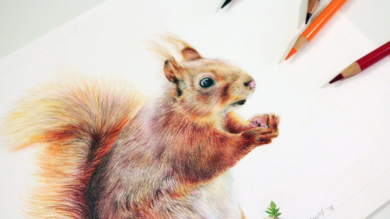 How To Draw A Squirrel With Colored Pencils Step By Step Tutorial Color Pencil Drawing Animal Drawings Pencil Drawings