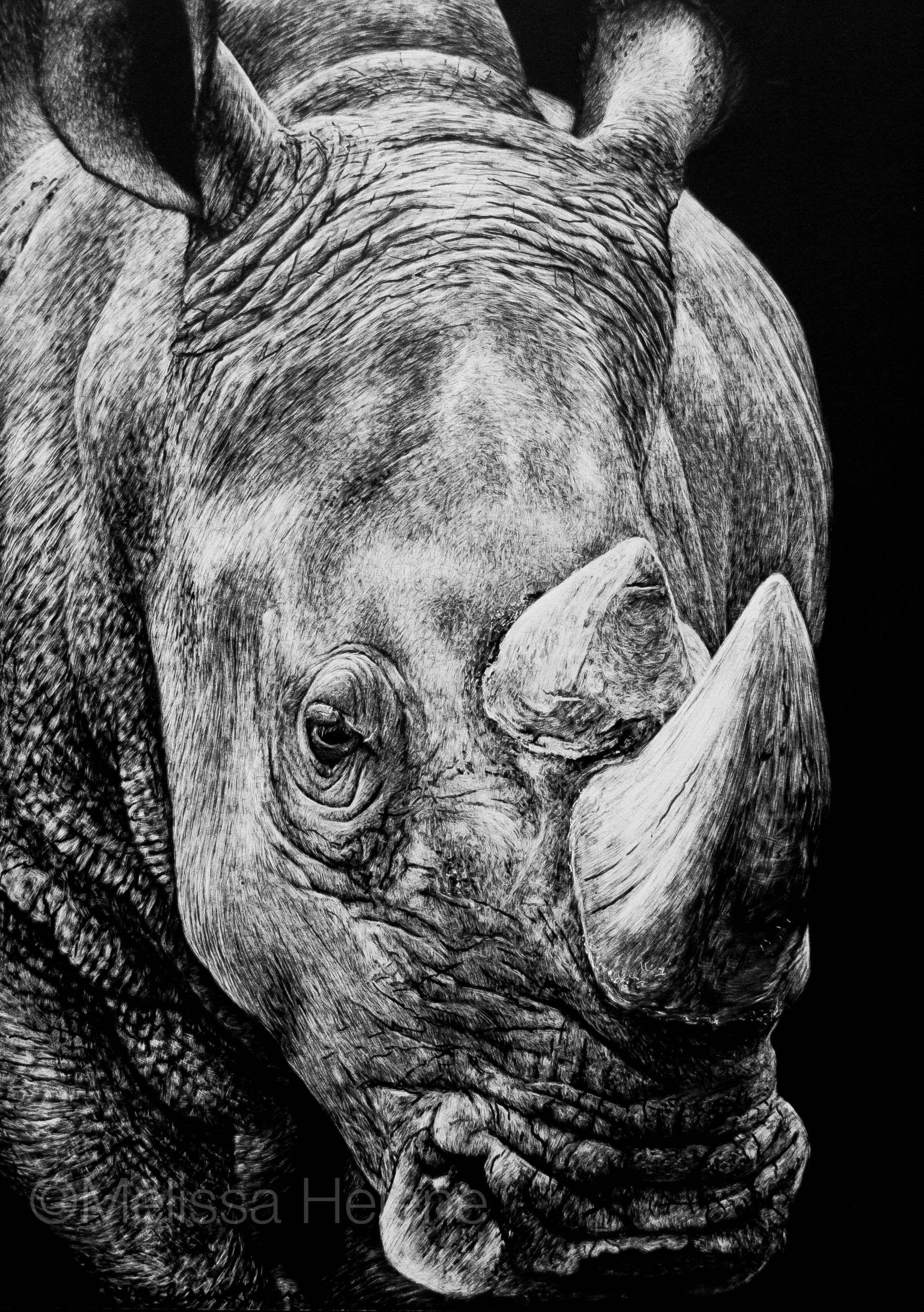 Rhino   5x7 scratchboard   Melissa Helene Fine Arts + Photography www.melissahelene.com #artwork #art #scratchboard #scratchart #wildlife #animalart #rhino #endangeredspecies #melissahelenefinearts #blackandwhite #conservation #conservationart #conservationartist