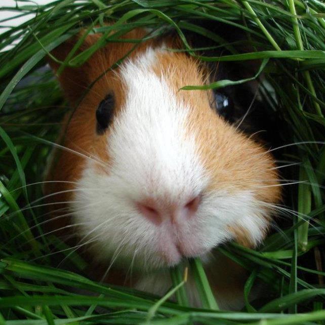 Fresh grass! Yummy!